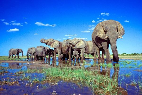 elefanti etosha park